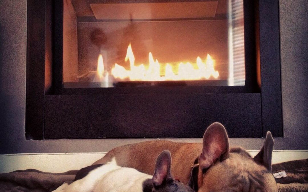 Dogs by Fire