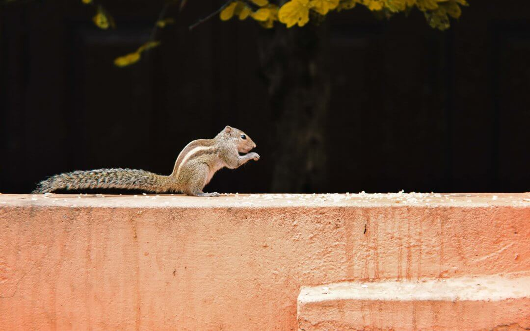Squirrel on building